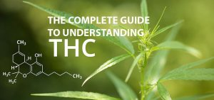 guide to understand thc