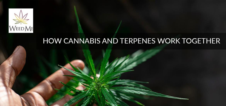 how cannabis works